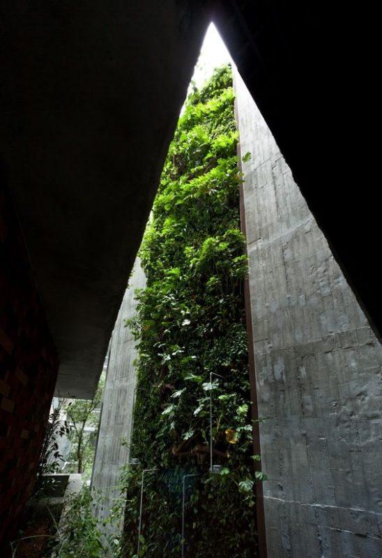 mẫu giếng trời trong nhà ống với tường cây xanh